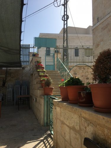 entrance-plants